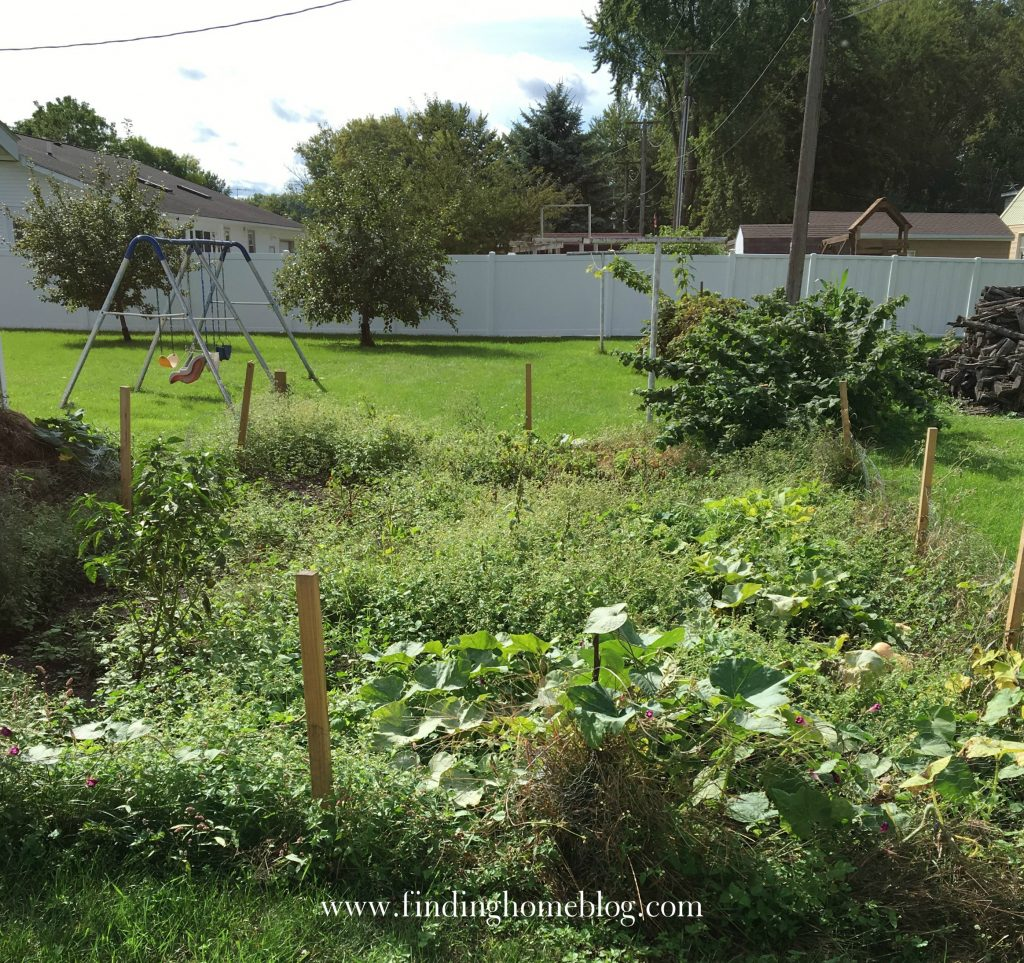 2016 Garden Update | Finding Home Blog